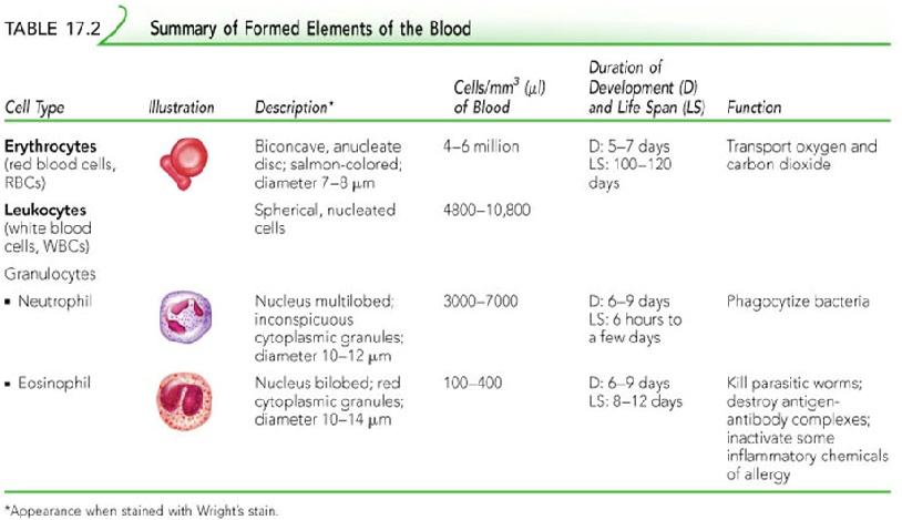 hematology2.jpg