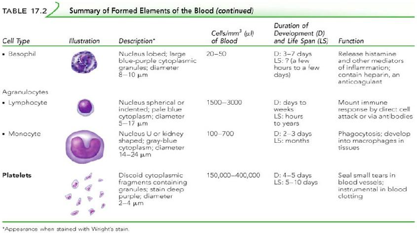 hematology3.jpg