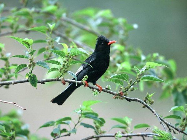 مجموعه رائعه من صور الطيور